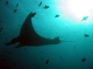 maldives safari karina 2006_28