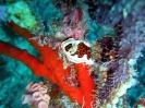 maldives safari karina 2006_51