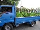 maldives safari karina 2006_58