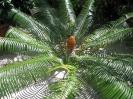 maldives safari karina 2006_6