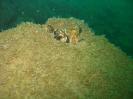 Black sea expedition 2010_81