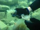 Black sea expedition 2010_98