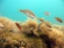 Подводные фотографии :: utrish_12
