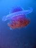 Vystavka jellyfish